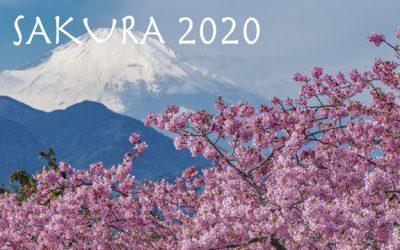 Sakura 2020: La floración de los cerezos en Japón